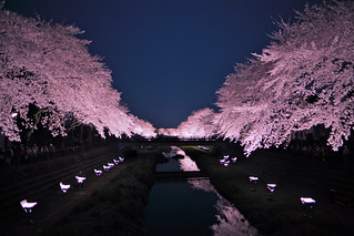 Light up the cherry blossom 2012 #5 | by Nam2@7676