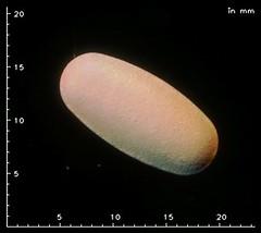 Keppra 500 mg