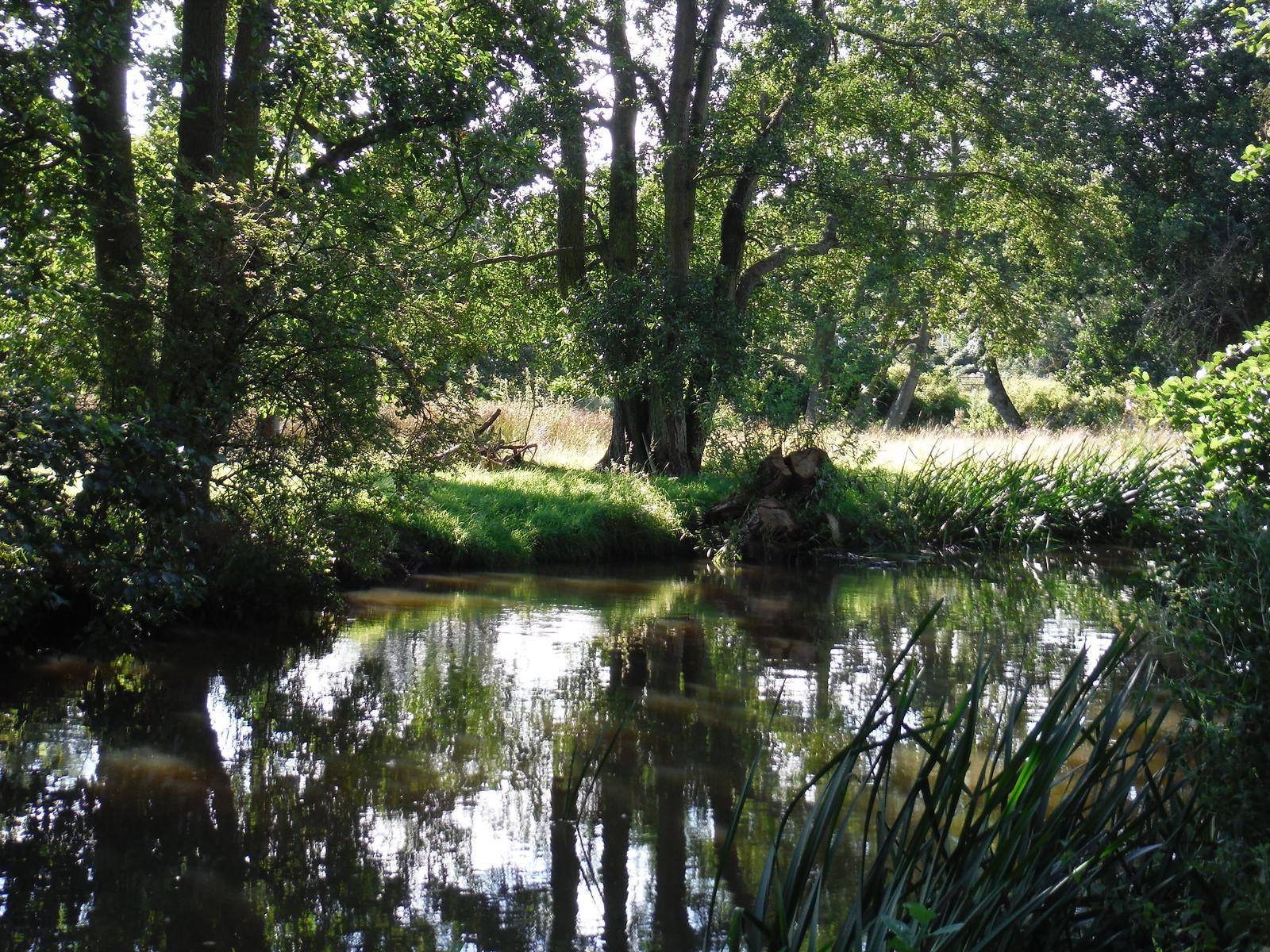 The Nadder River near Tisbury Mill SWC Walk 248 Tisbury Circular via Hindon