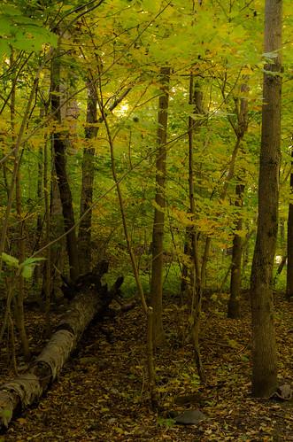 mountain canada green fall forest woods day pentax quebec outdoor montreal montroyal k5 pentaxk5 k5ii pentaxk5ii
