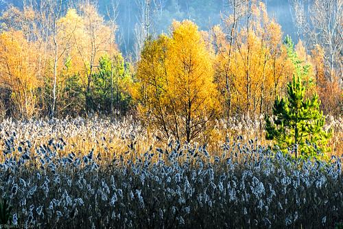 morning november autumn light fall morninglight conservation greenwood hike 2015 d610 greenwoodconservationarea november2015 briandtucker