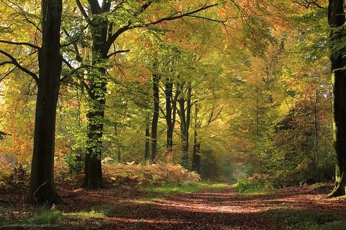 autumn trees light colour fall nature yellow forest jaune automne canon landscape path lumière naturallight arbres paysage couleur chemin forêt forestpath lumièrenaturelle canoncamera canonlens telephotozoomlens cheminforestier télézoom