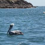 Mo, 02.11.15 - 13:00 - Pinguinera Islote de Piñihuil