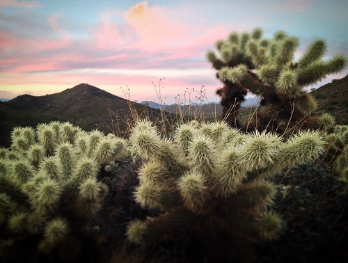 sunset arizona cactus landscape desert az sonoran preserve cholla iphone phonenix