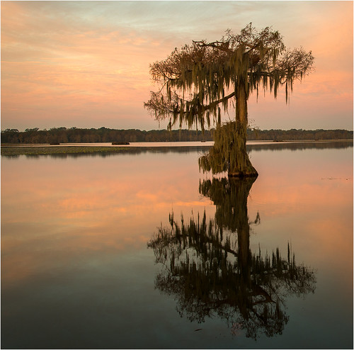 usa lake reflection tree nature sunrise landscape dawn reflecting nikon louisiana bayou swamp wetlands cypress thesouth cajun acadia deepsouth lakemartin breauxbridge afs24120mmf4gvr d800e