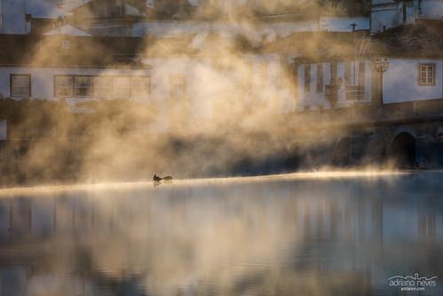 water europe nabão portugal ribatejo tomar bird city cityscape duck fog morning old reflection river sunrays sunrise urban