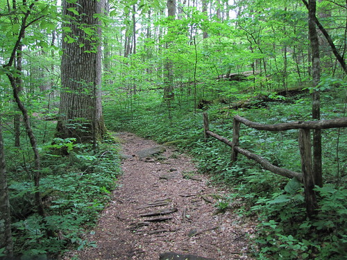 Trail view with broken fence | by Buddha Dog