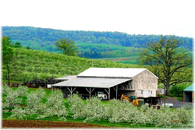 Adams County Blossoms