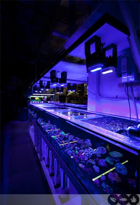 Ecoxotic Cannon LED Pendant at Aquatic Warehouse San Diego