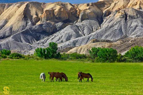 horses colorado adobe rockymountains cedaredge westernslope davidleeshort