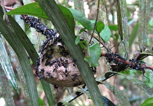 Wasp nest close-up