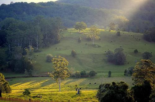autumn trees sunlight animals creek landscape countryside cattle illumination australia farmland pasture valley nsw australianlandscape sunbeam grazing lateafternoon ruralaustralia northernrivers tweedvalley floodedgums patsmithscreek
