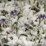 Winter comes quickly