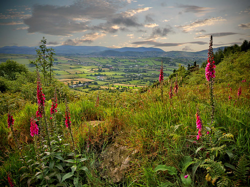 sunrise canon landscape day view hills fields northernireland wildflowers foxglove 1770 alright ulster countyarmagh sugma 60d ballintemple pwpartlycloudy