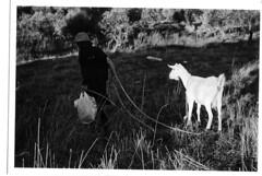 vrouwtje met geit