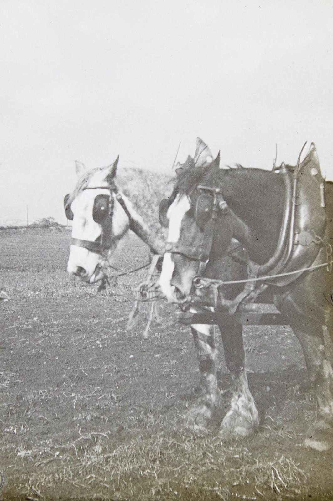シャイヤー - Horse Scanner