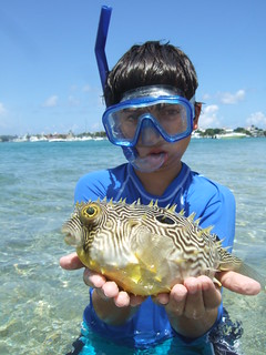 Christopher with a striped burrfish. | by AdventureMIke.com