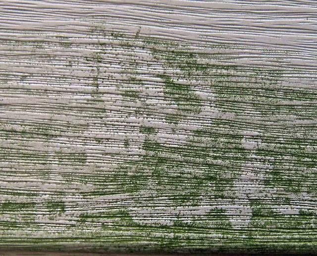 Radula Scrape Tracks...