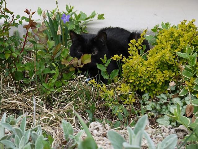 Bubba in the garden