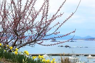 2012年4月21日 南三陸町歌津・泊浜地区   by shiggyyoshida