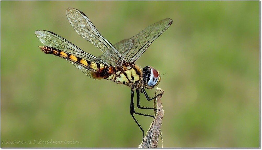 Dragonfly 029
