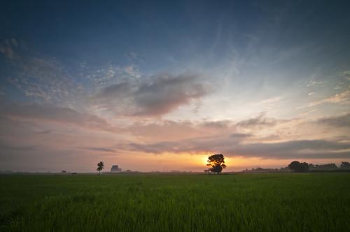 nature sunrise landscape dawn farm philippines ricefield tarlac bamban