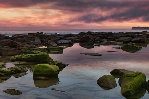 sunset seascape green landscape moss rocks dusk majenta spoonbay