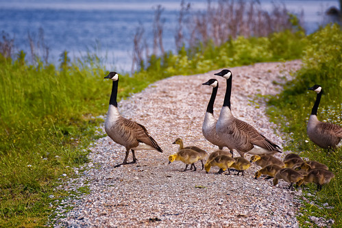 Kids, Clean The Path While We're Crossing!