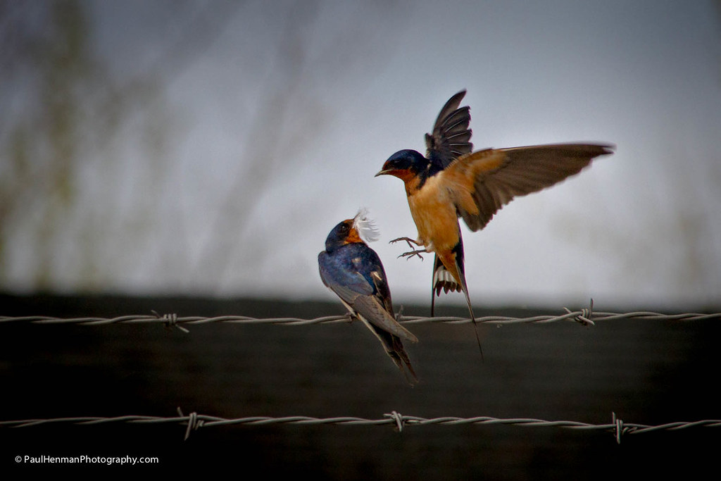 Attack! by Paul Henman