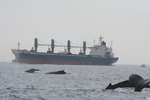 Whales Near Tanker   by Green Fire Productions