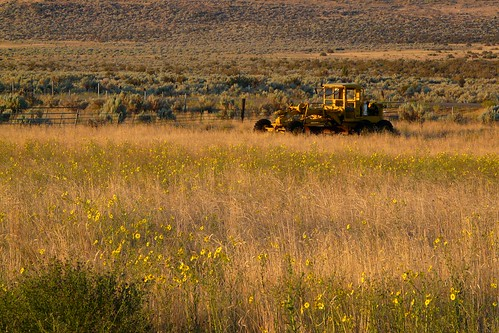 california flowers tractor abandoned field yellow rural america sunrise dawn weeds norcal grader lassencounty