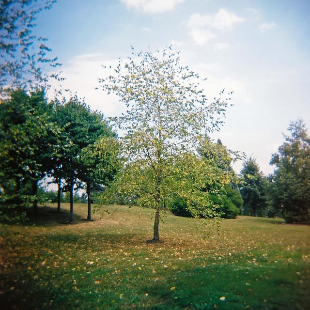 Holga et l'arbre