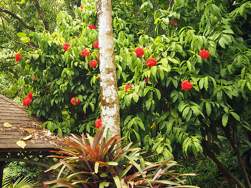 McBryde - Allerton Gardens -Kathy 10 | by KathyCat102