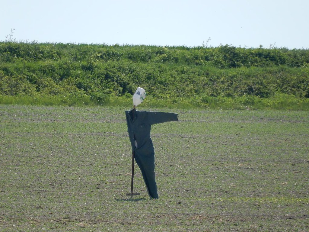That way Baldock Circular: Minimalist scarecrow