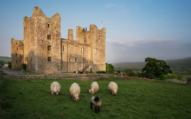 Castle Bolton And Some scraggy Sheep In North Yorkshire