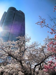 六本木ヒルズ森タワーと毛利庭園の桜 | by ototadana