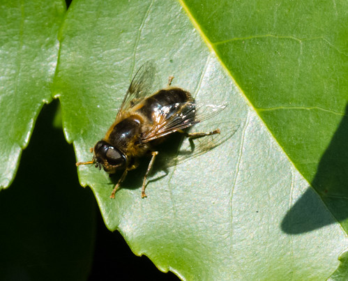 Bee resting on a leaf