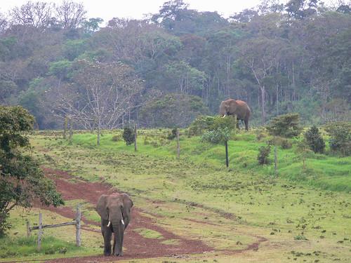 camera trees plants elephant animal buildings hotel kenya pachyderm treetops accommodation builtenvironment nyeri panasonicdmcfz30 featureslandmarks