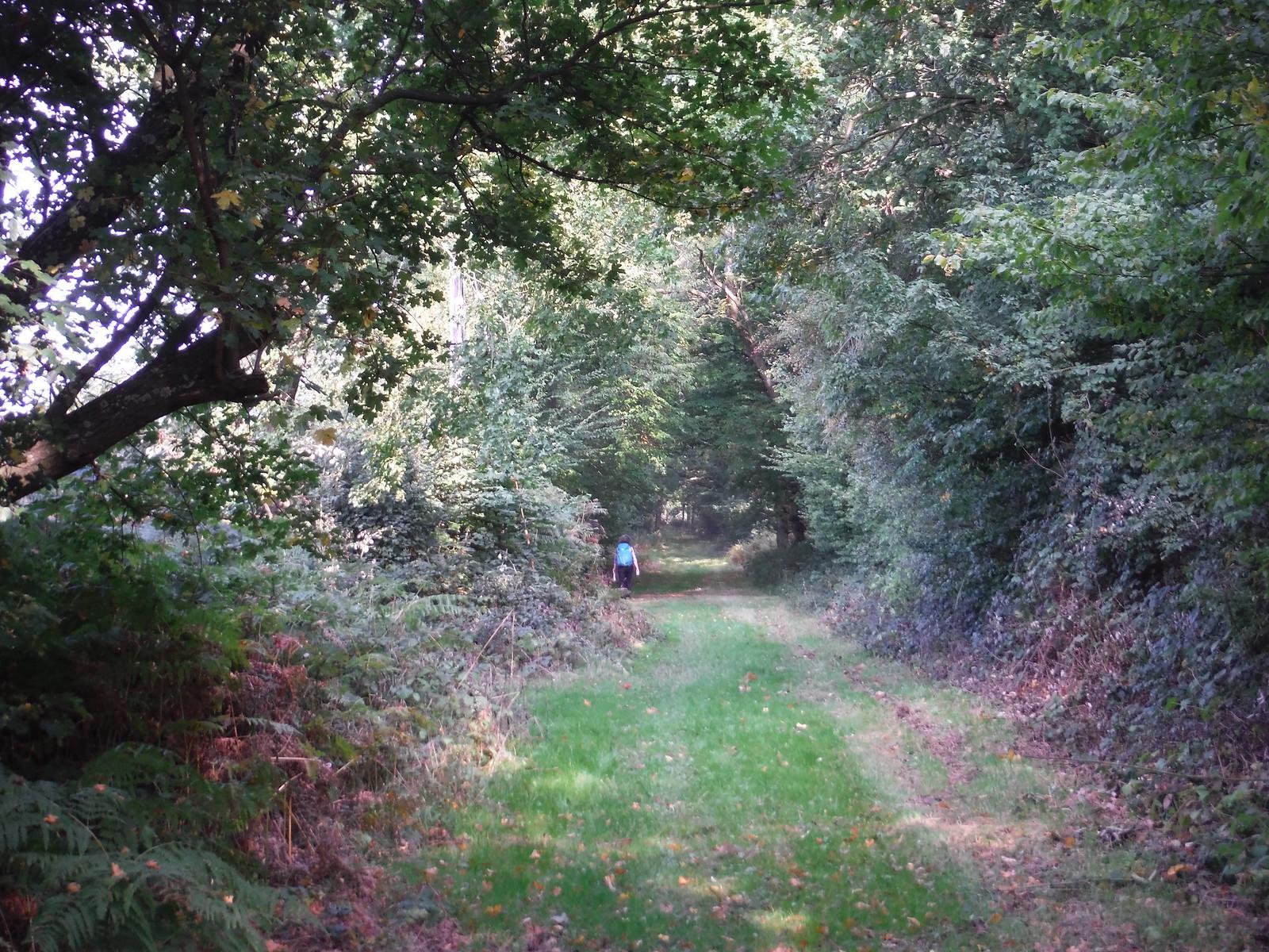 Between Trees, east of East Hanningfield SWC Walk 159 South Woodham Ferrers to North Fambridge