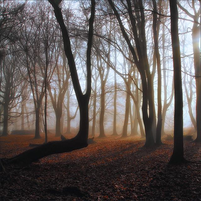 Ashridge Mist II