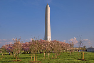 Cherry Blossoms at the Washington Monument Washington (DC) March 2012   by Ron Cogswell