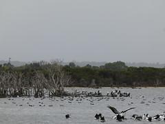 do, 08/03/2012 - 03:08 - 54. Vogel kijken bij het Woody meer