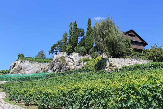 Terrasses de Lavaux - St-Saphorin–Lutry