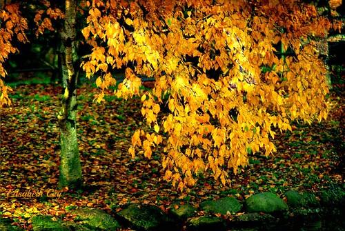 elisabethgaj malmö sweden szwecja sverige skåne scandinavian europa autumn natur nature park trees abigfave 100commentgroup texsture