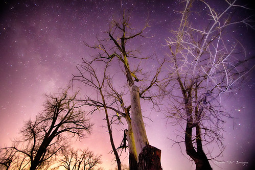 morning trees winter sky nature beautiful night canon stars landscape star early colorado colorful seasons purple astrophotography hdr 6d jamesinsogna