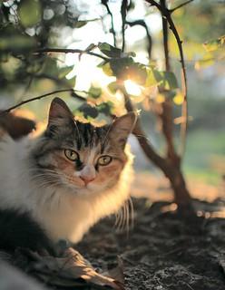 Cat | by Joshua Guan