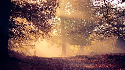 lighting morning trees winter light england sun mist nature misty fog fairytale forest sunrise landscape golden countryside kent woods nikon f14 85mm calm sunrays magical d3