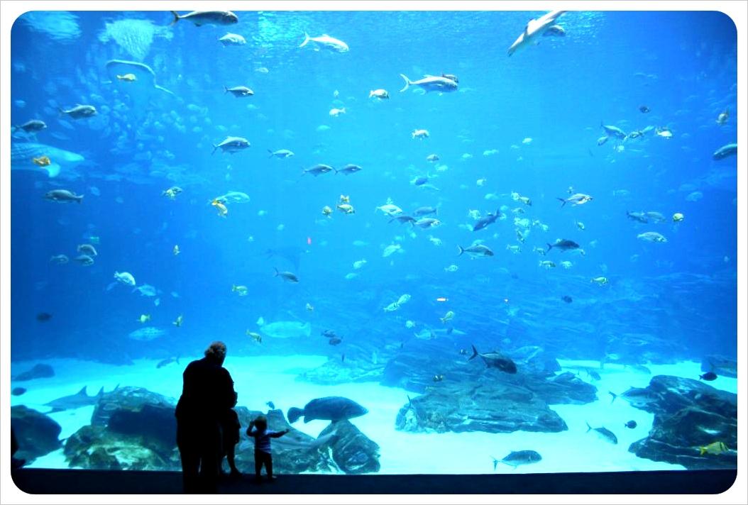 atlanta aquarium big tank