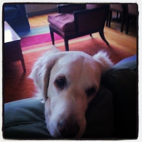 Frisket waiting for @turbotodd to hand over his sandwich | by epc