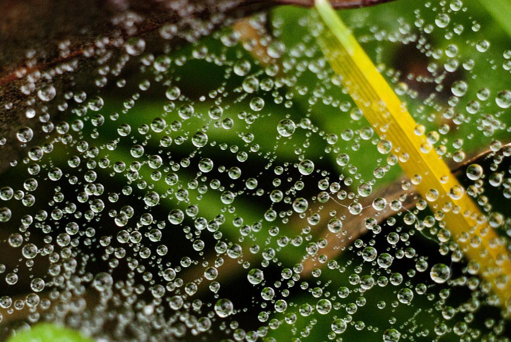Spiderweb/dew lacework